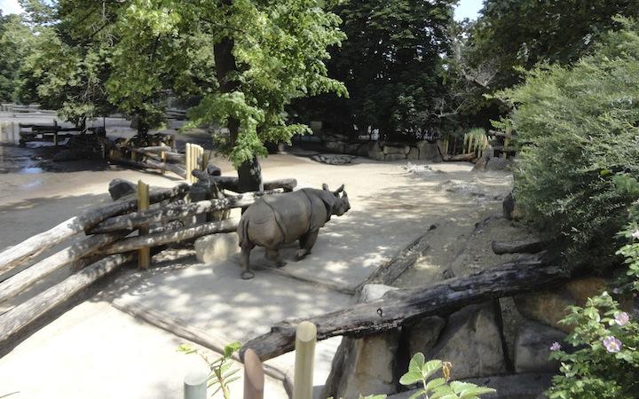 ZOO PARK SCHONNBRUNN – VIENNA